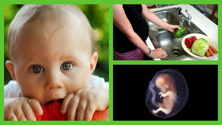773x435 392749 - دانشمندان: ذائقه و سلیقه غذایی در رحم مادر شکل میگیرد